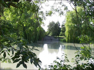 One of the small lakes on the Wellcome Trust Campus in Hinxton